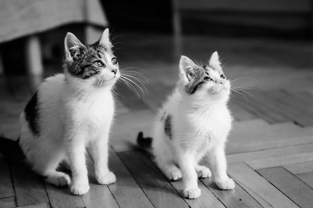Kot obsikuje mieszkanie, kot sika poza kuwetą. Kot obsikuje dywan i łóżko