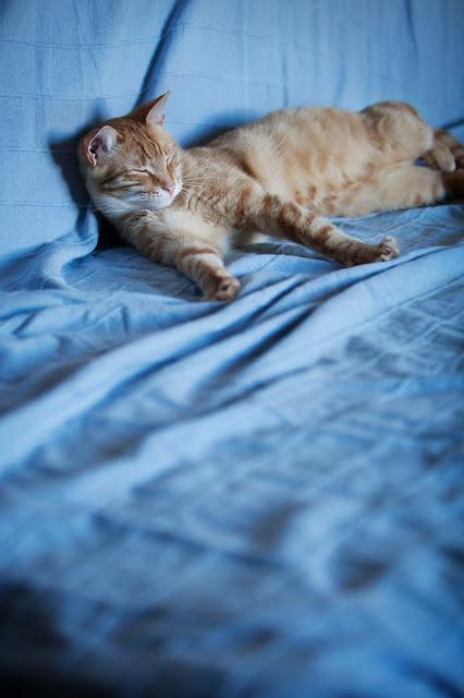 Jak oswoić kota. Znalazłeś/ aś kota na polu i chcesz go oswoić. Dziki kot - czy da się oswoić. Jak obchodzić się z dzikim kotem