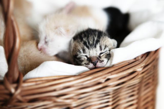 Sterylizacja. Dlaczego powinniśmy sterylizować koty wolnożyjące?