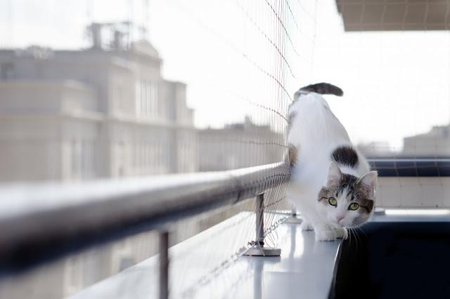 Zabezpieczenie domu dla kotów