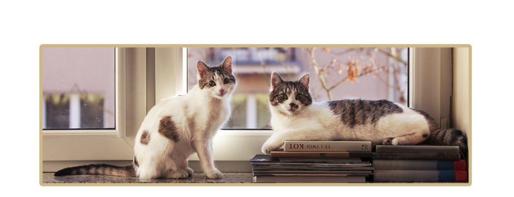 kicikot blog o kotach