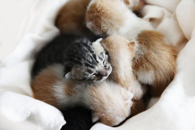 sterylizacja kota