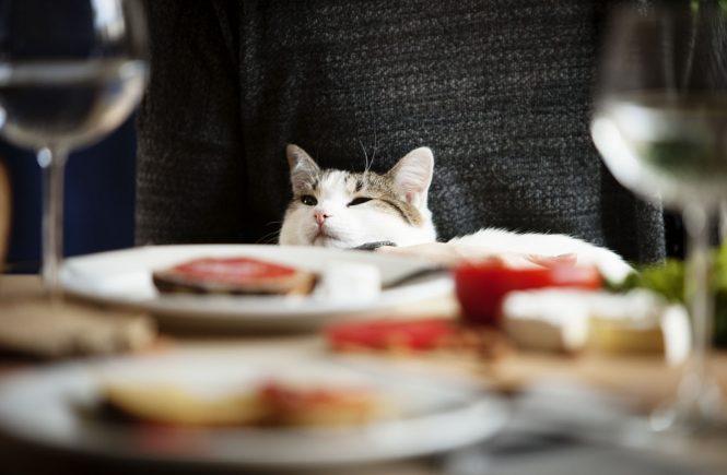 czym karmić kota