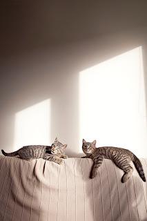 dwa koty w domu