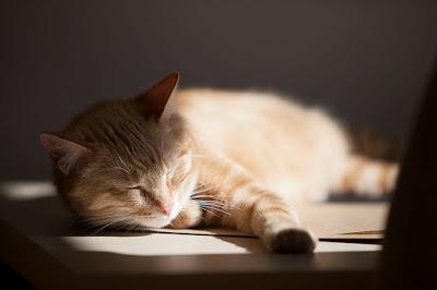 jak nauczyć kota mieszkania w domu