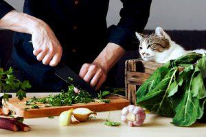 jedzenie i kot