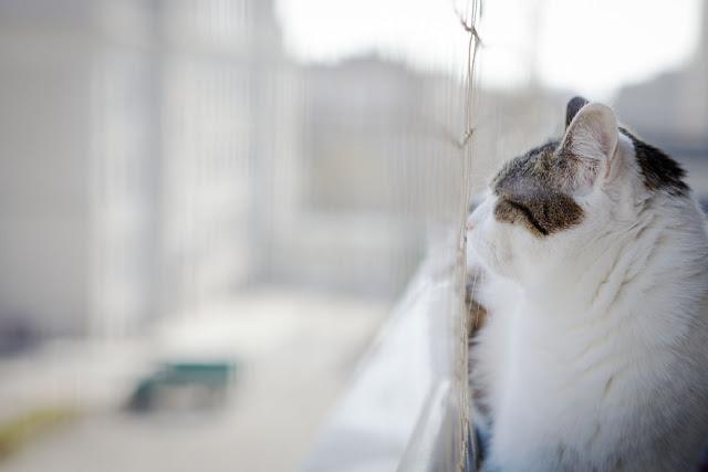osiatkowanie balkonu