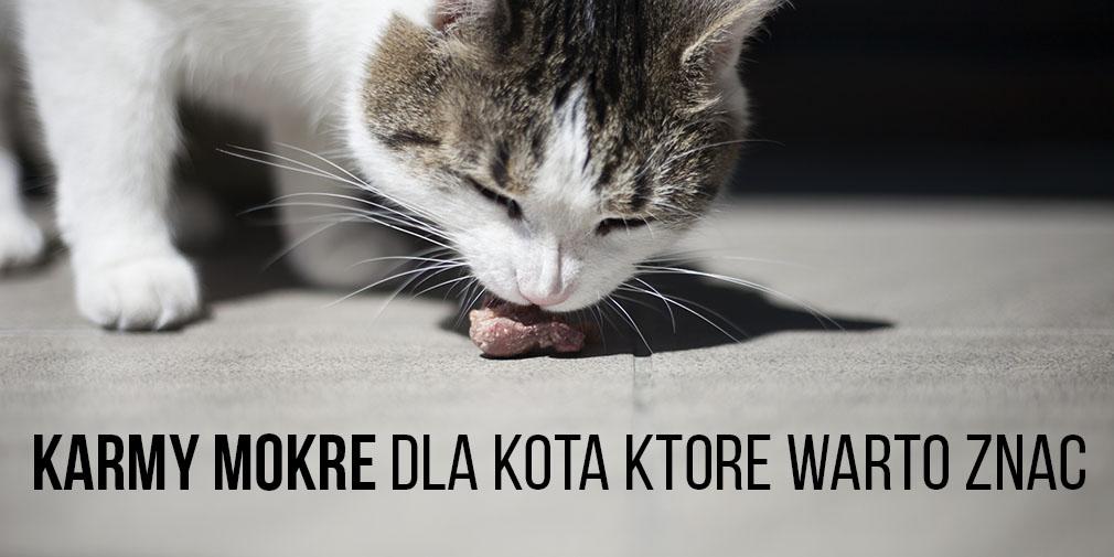dobre karmy mokre dla kota