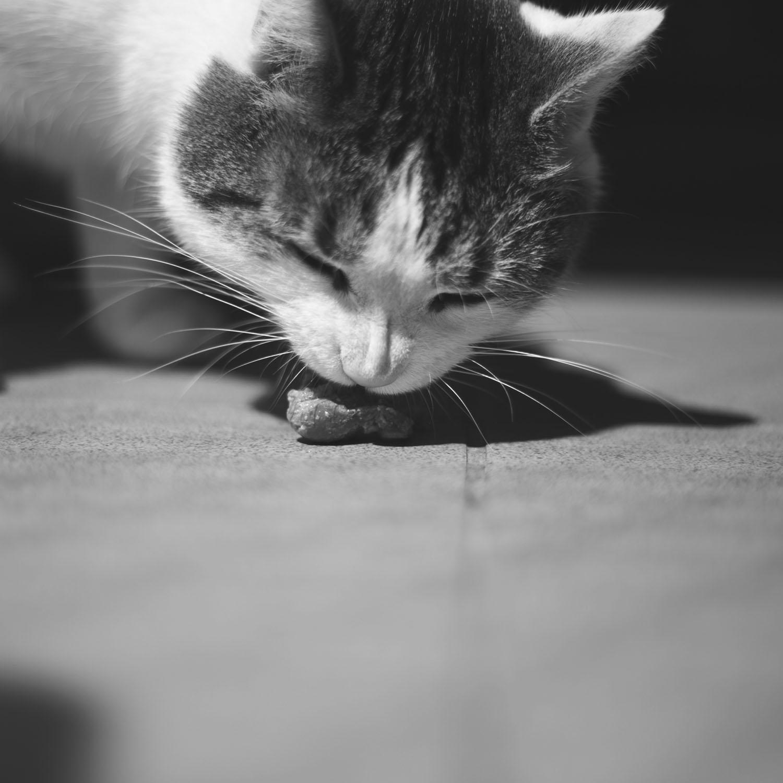 mokra karma dla kota
