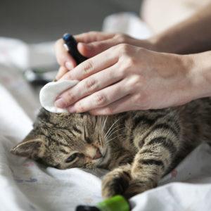 cukrzyca u kota